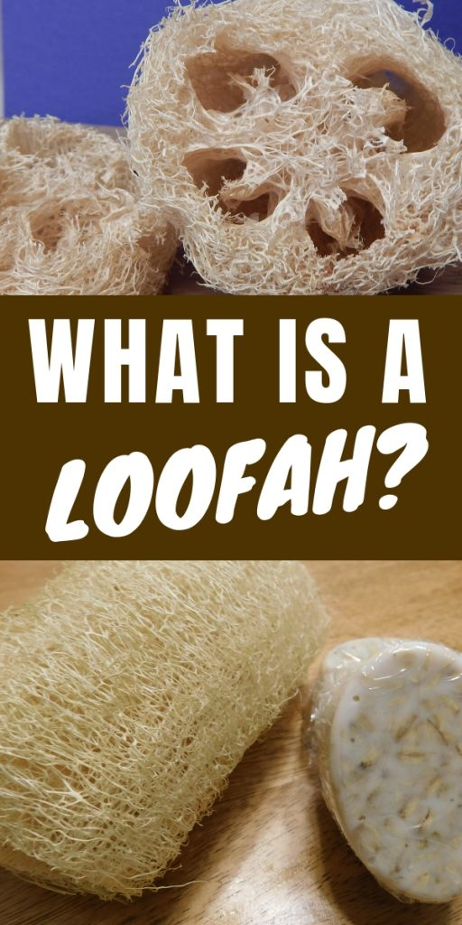 What is a loofah? Where does it come from? What are loofahs good for? The answers might be kind of surprising to you. I was shocked when I learned.
