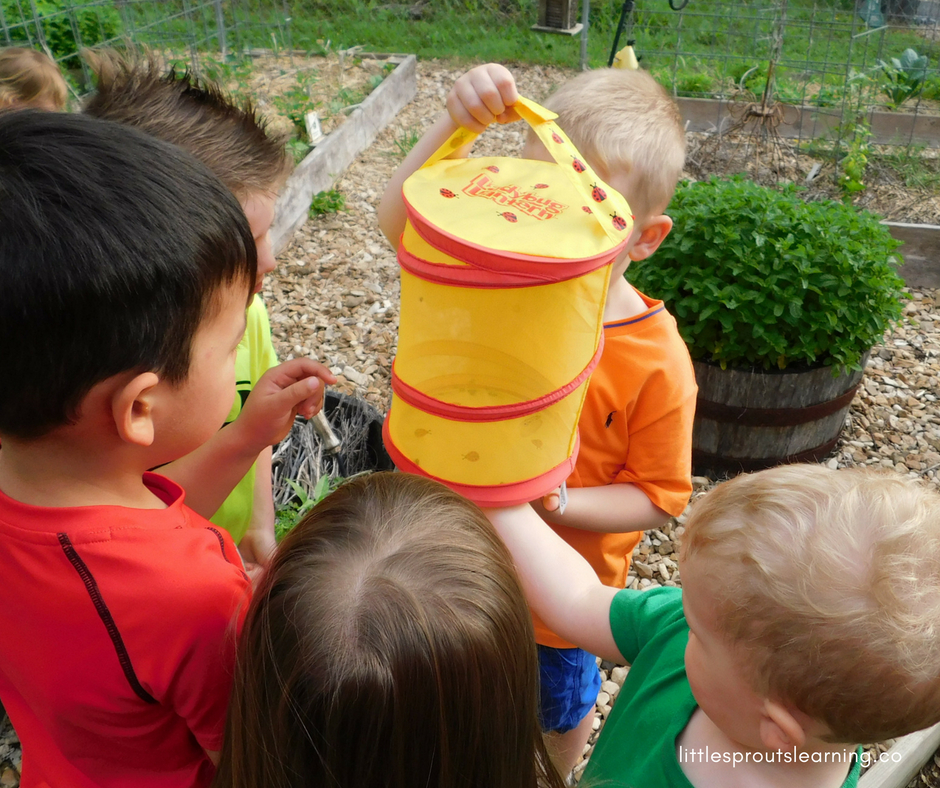 kids in the garden observing a container of ladybugs