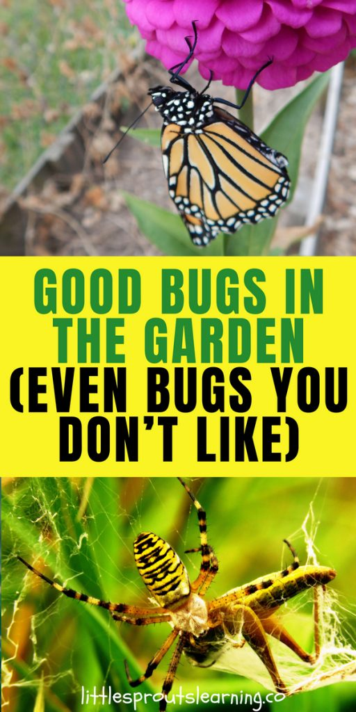 Good Bugs in the Garden (Even Bugs You Don't Like)