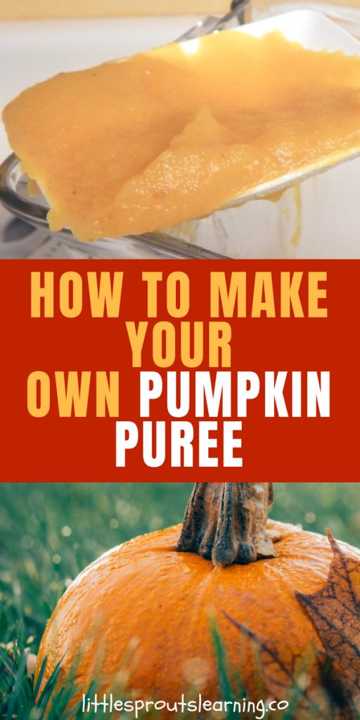 What do you do with your leftover pumpkins? I hate to throw food away, even if they are decorations. After Halloween, you can roast up your pumpkins that you decorated with and use them to add nutrition and flavor to dishes all winter long. You can even find uses for the pumpkin guts.