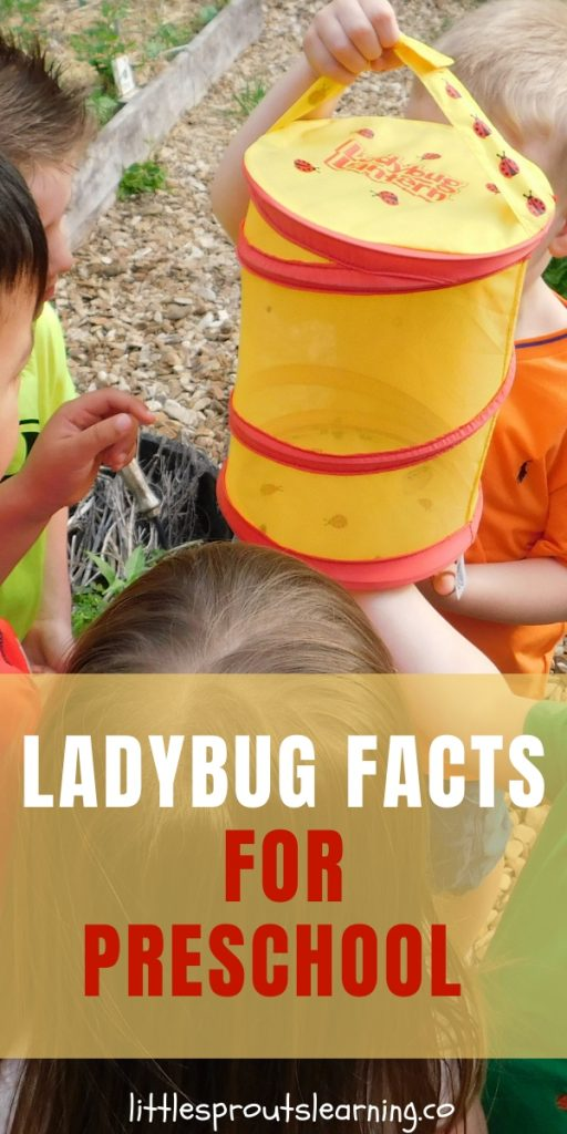 Are your kids enamored with ladybugs? Mine sure are. We love learning everything we can about these beautiful insects. Check out these ladybug facts for kids to learn.