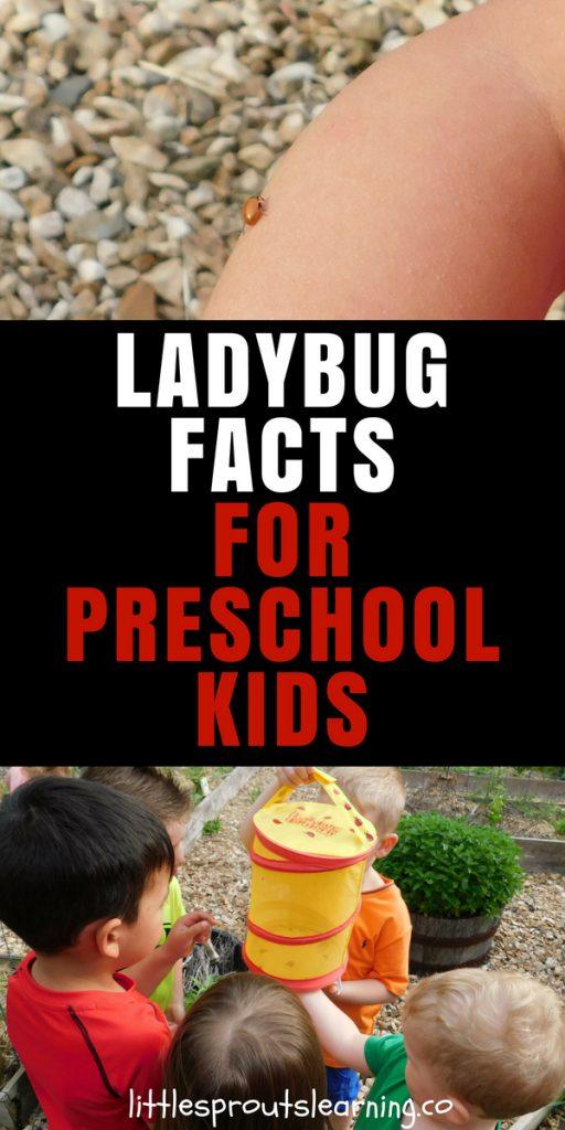 Ladybug facts for kids preschool ideas