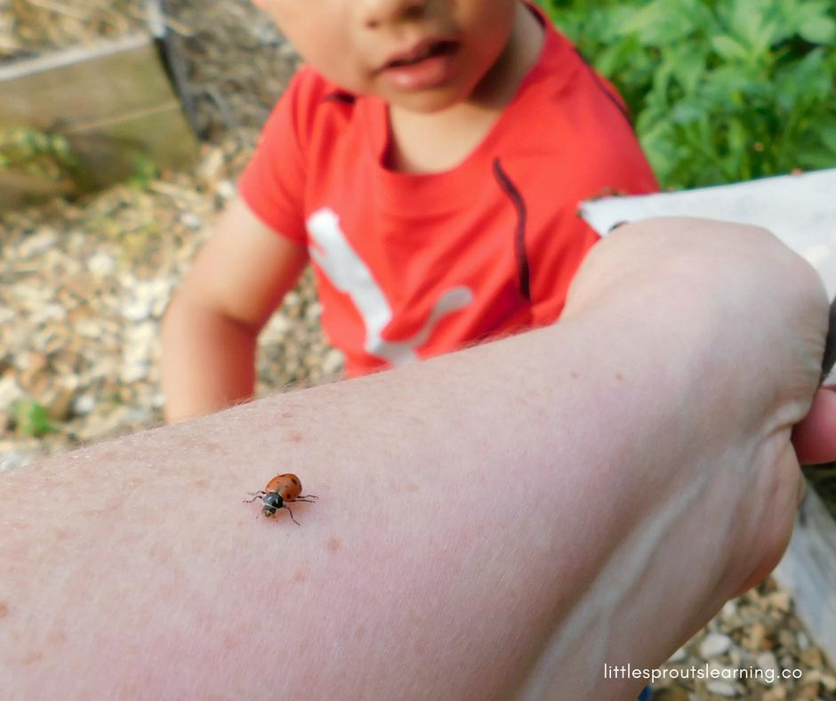 ladybug crawling on arm. Ladybug facts for kids