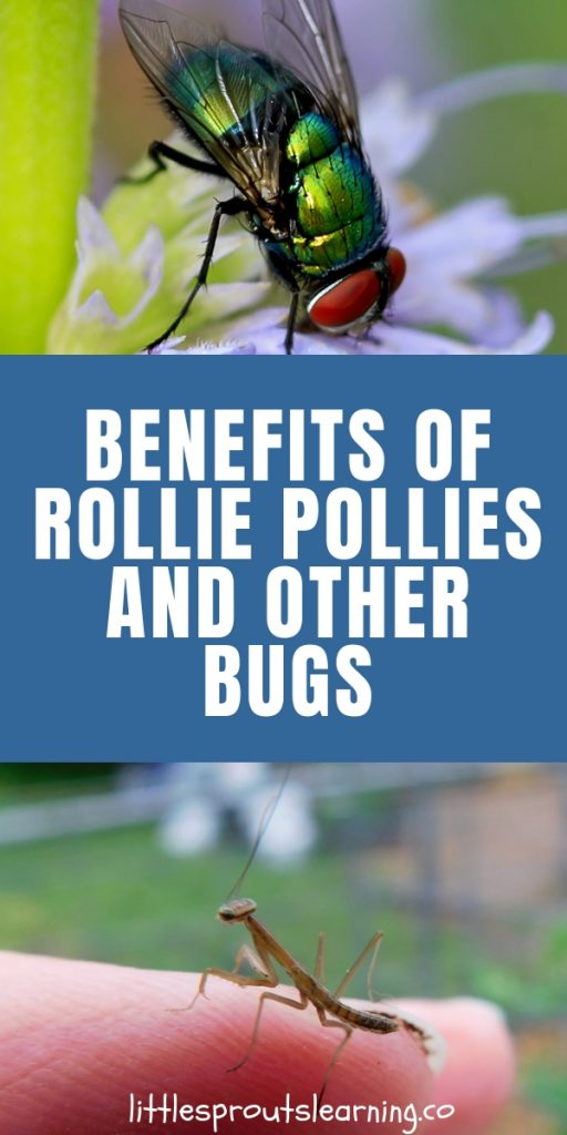 Do you see some creepy crawly bugs in the garden and wonder if they are friend or foe? Find out the benefits of rollie pollies and other bugs that will surprise you.