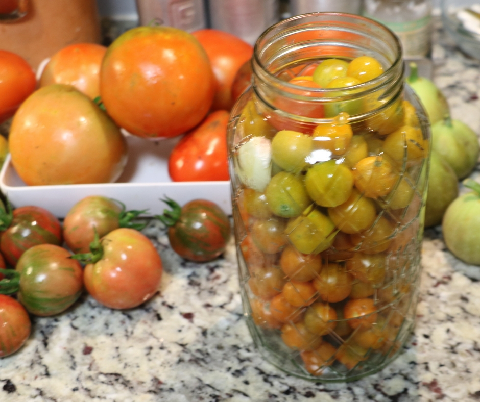 Easy Refrigerator Pickled Cherry Tomatoes. Jar full of cherry tomatoes to pickle