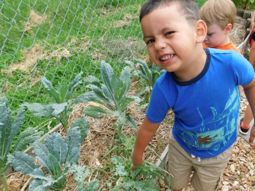 Have you ever thought of growing food with young children, but you don't know how? Check out these tips and steps for how to start a preschool garden.