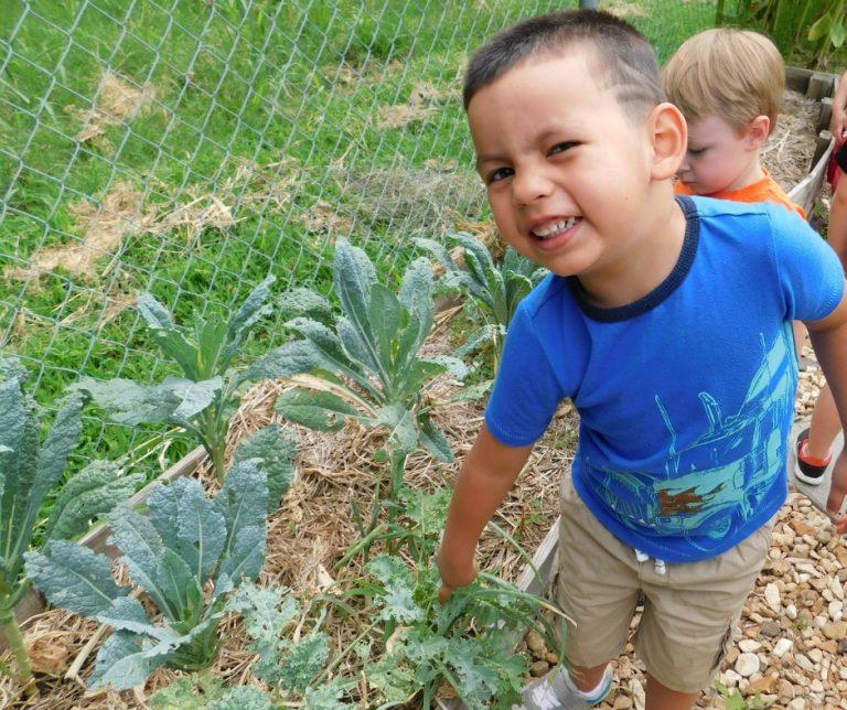 How to Start a Preschool Garden