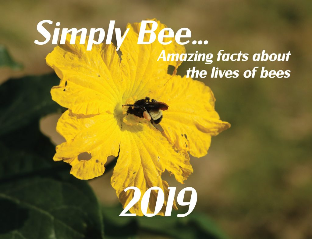 Bee calendar full of bee facts