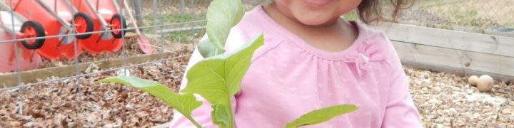 child holding seedling, what to do in the garden in may, What are the easiest plants for kids to grow? There are a few things that grow fast or are foolproof for the children's garden (and yours).