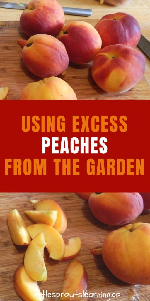 Peaches are one of the best rewards of summer, but if you grow a peach tree, you tend to get a ton of excess peaches all at once.