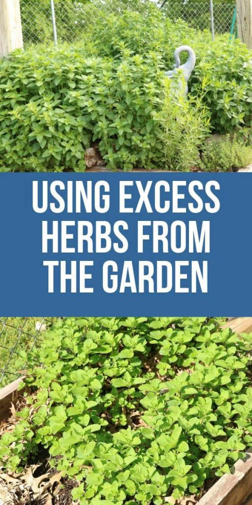 I don't know about you, but my herb plants produce far more herbs than I could ever use. What can you do with excess herbs from the garden? Check out these ideas.