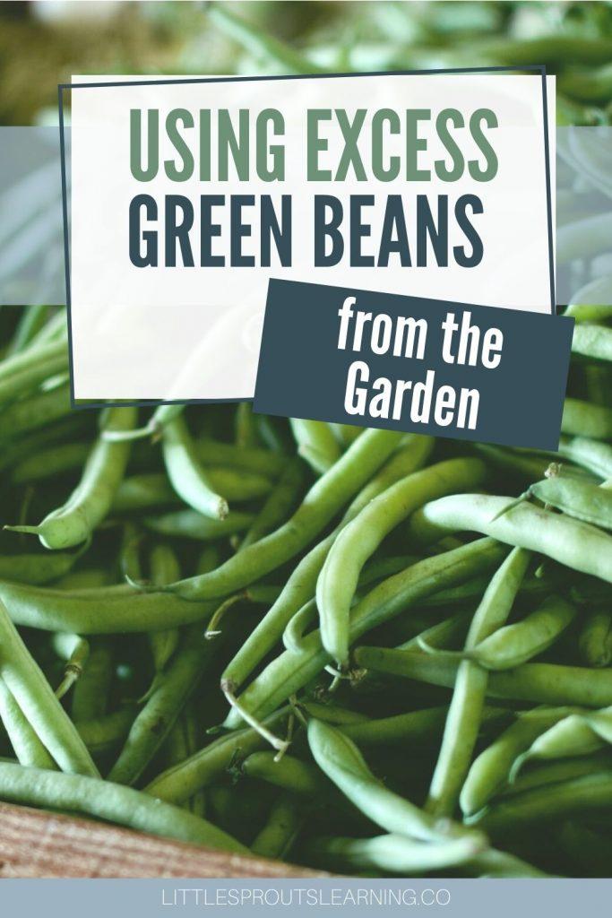 big pile of fresh green beans
