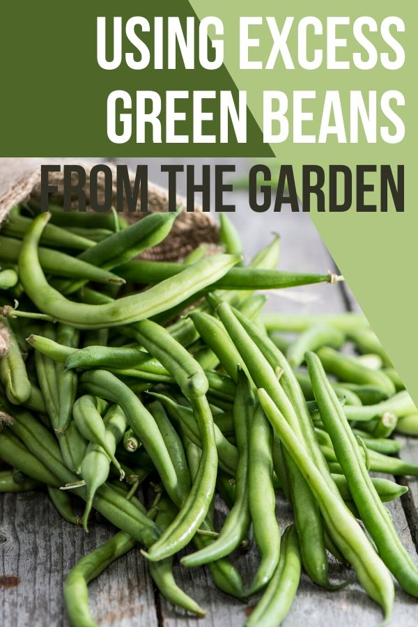 Sometimes the garden can bless us with too much of a good thing. Having excess green beans all at once can be overwhelming, but there are a ton of great things you can do with them.