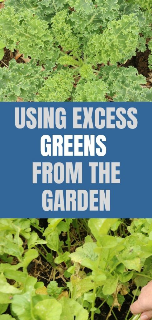 Sometimes the garden puts out more excess greens than you can handle at once. Check out these creative ways to use them and save them for later.