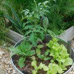 A great way to get started gardening is to try bucket gardening. There is no weeding and it's a small space to keep up with while you're learning.