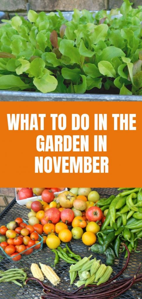 In Oklahoma there is still plenty to do in the garden in November. Even though the garden season is winding down, there is still plenty to grow.