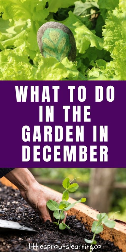 It's possible that zone 7 may not have had a hard freeze in the garden in December. You could be gardening and picking out your Christmas tree.