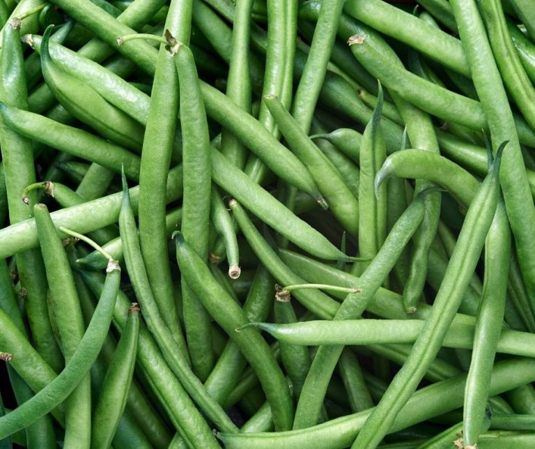 How to Grow Bush Green Beans and Pole Green Beans