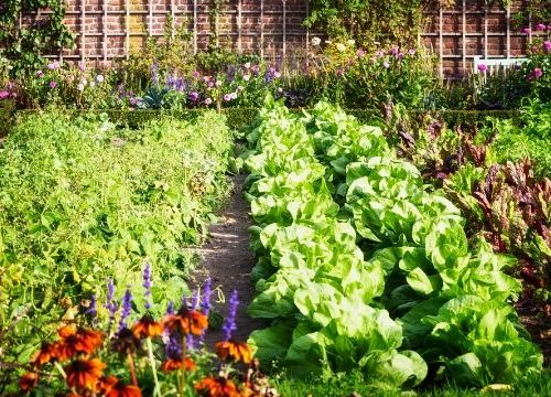 Bugs in the garden can be a real challenge. But is reaching for a can of spray the best first choice? Organic gardening is a great idea, but can you really garden without pesticides?