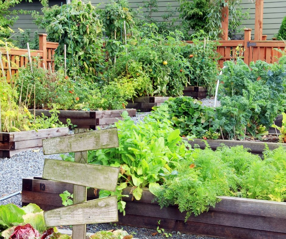 raised bed gardens with plants growing