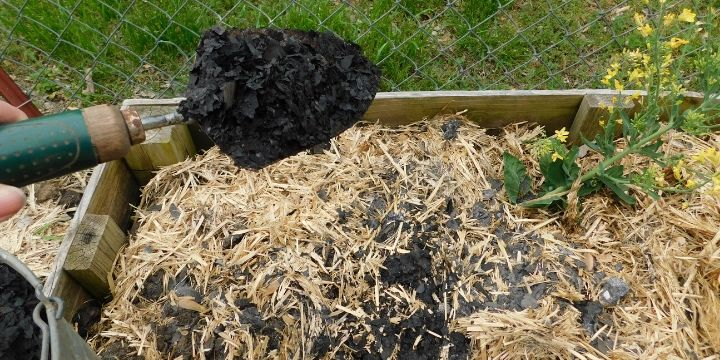 Ash can be a great addition to the garden for some uses. Learn how to use ash in the garden in this article.