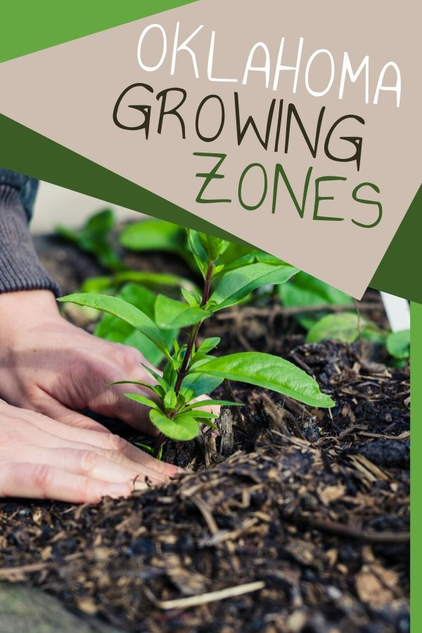 Oklahoma growing zones range from 6a to 8a. Your growing zones makes a big difference in how you grow, so you need to know where you are on the USDA zoning map.