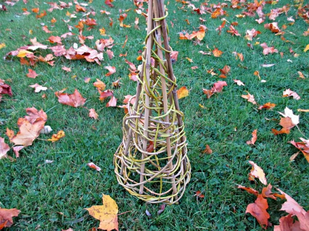 willow cone for tomato cage in the garden