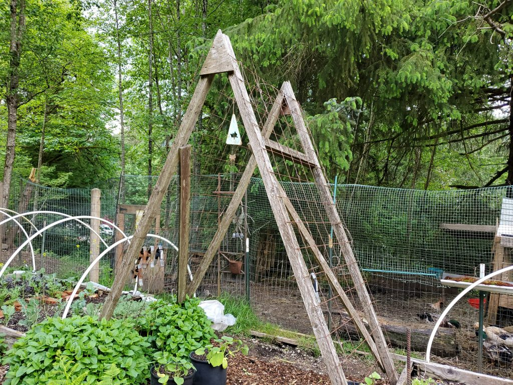 beautiful garden with a frame shaped wooden garden trellis lined with wire