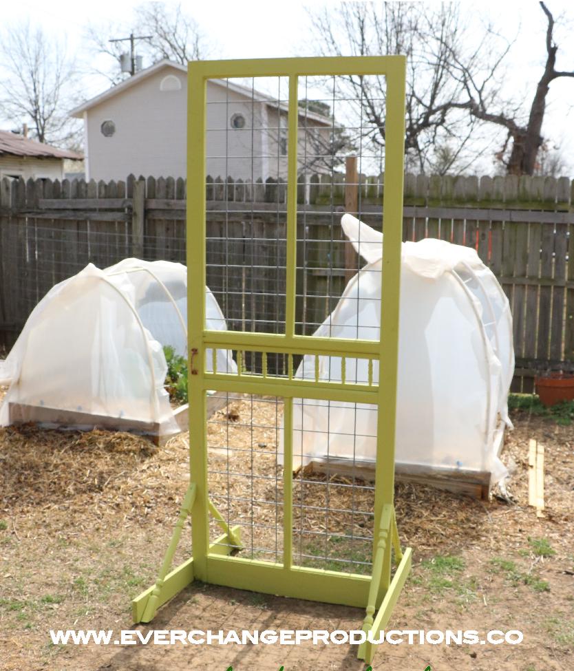 green garden trellis made from repurposed screen door