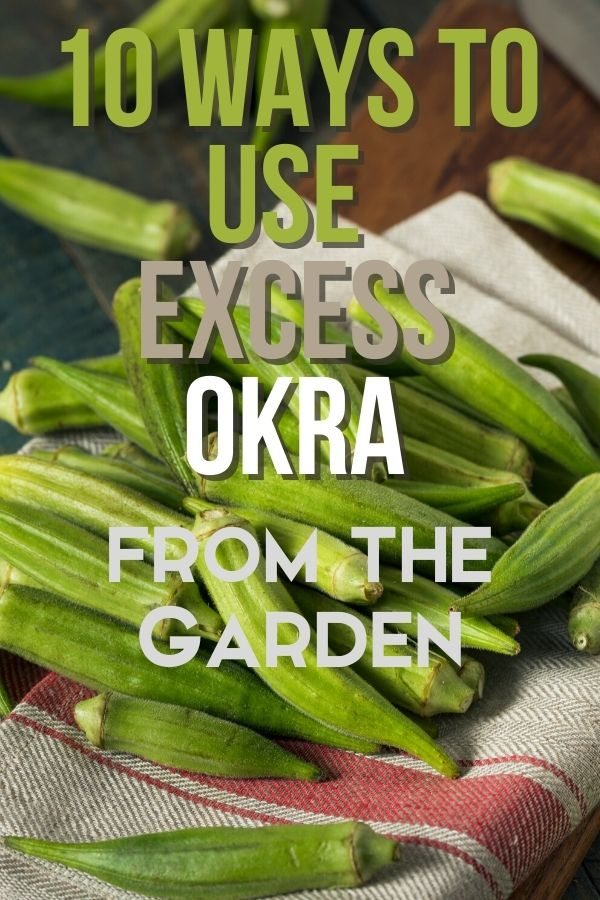 When the summer gets hot, the okra plants wake up and put out tons of excess okra at once. What can you do with okra that you can't eat right now?