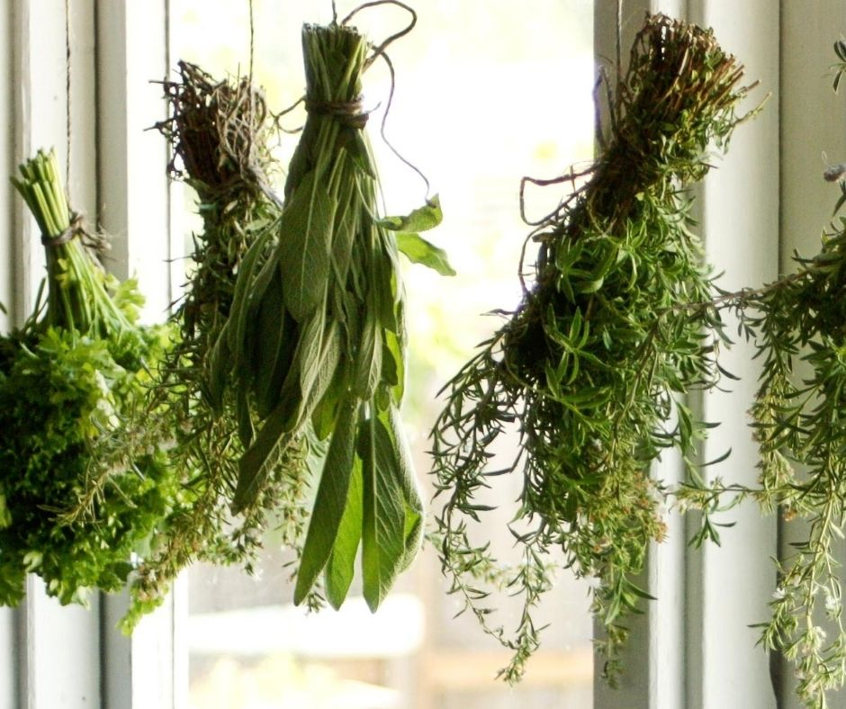 dried herbs hanging in the window