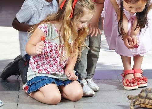 Coming up with home daycare field trip ideas is easy to do if you use a little creativity with what's in your area. Field trips teach kids many things and they are fun.