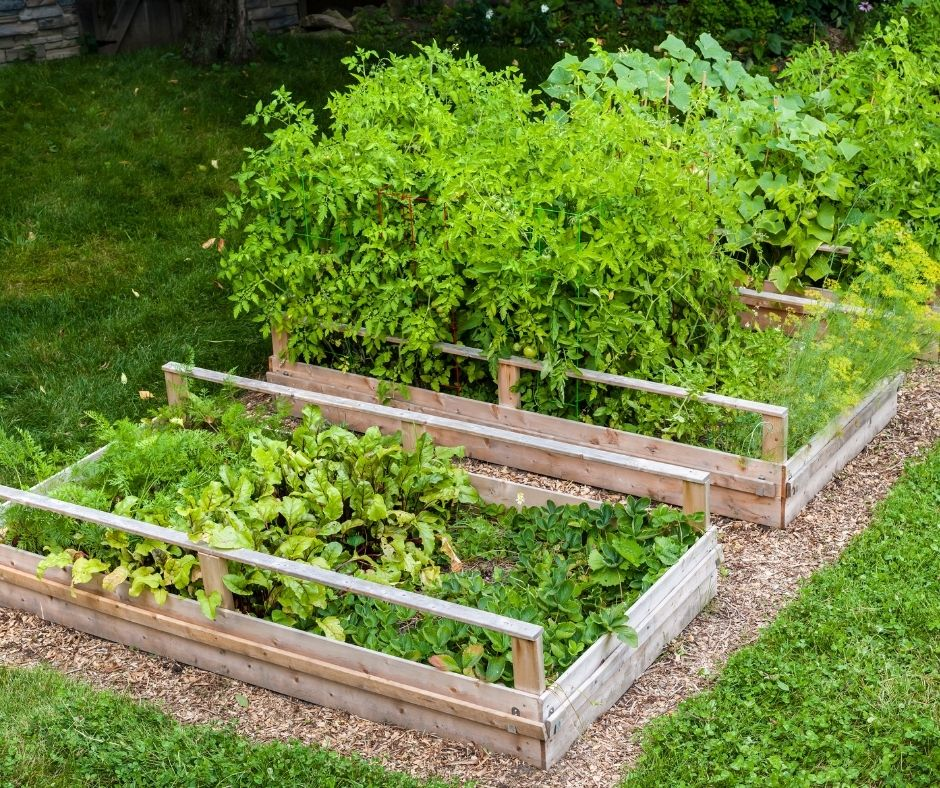 raised garden beds with full summer plants