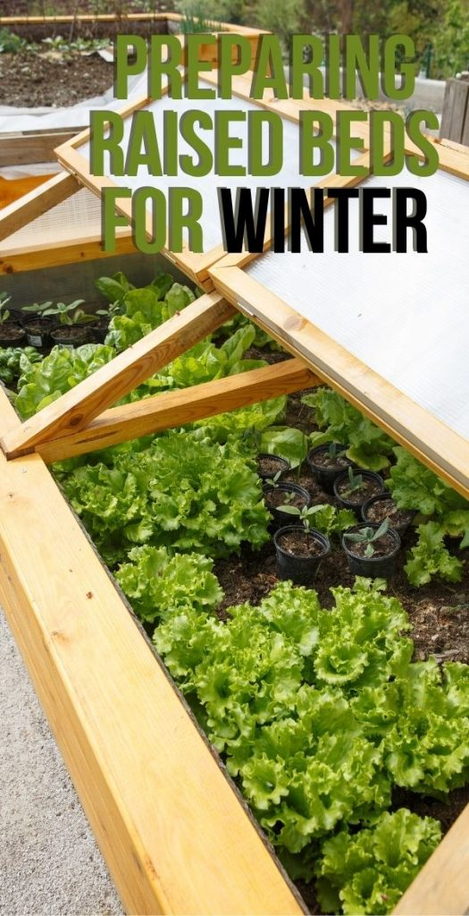 Winter is coming soon, so preparing raised beds for winter is the next step in the garden. There are a few things you can do to make your spring garden far more productive.