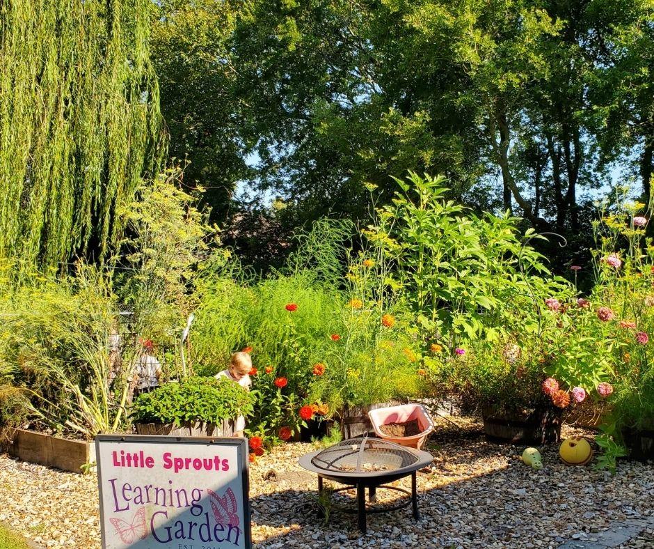vegetable garden growing in summer