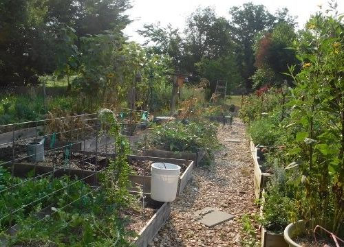 Planting your first vegetable garden is not as hard as you might think. Check out these 10 easy steps to get you growing.