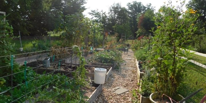 10 Easy Steps to Planting your First Vegetable Garden