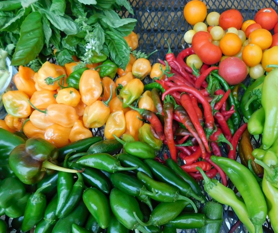 table full of fresh vegetables from the garden, peppers, herbs, tomatoes, etc.