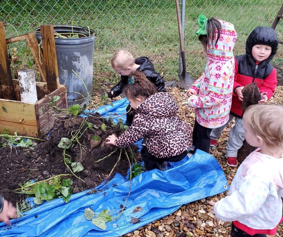 kids harvesting sweet potatoes from a dumped over potato tower made of scrap wood