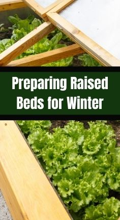 Winter is coming, so preparing raised beds for winter is the next step. There are things you can do to make your spring garden productive.