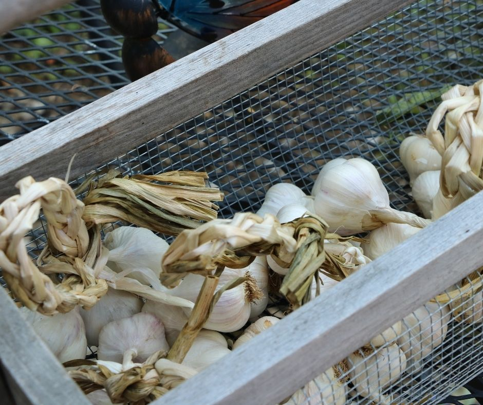 basket of garlic on the table