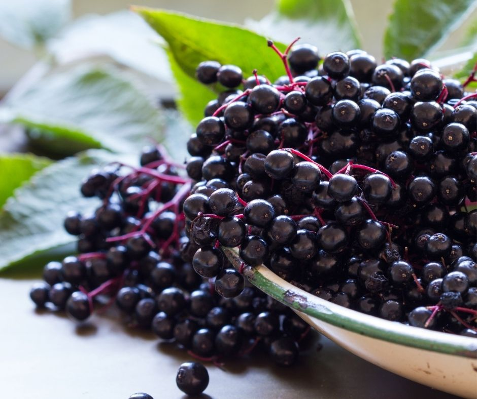 bowl of ripe elderberries in a bowl on a table