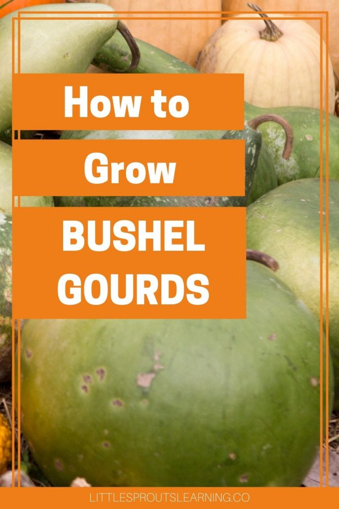 How to Grow Bushel Gourds