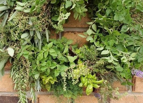 edible herb wreath hanging on a brick wall.