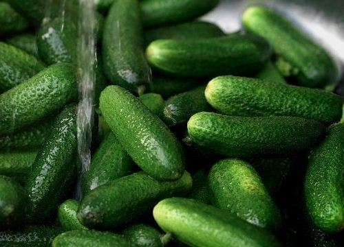 a sink full of fresh cucumbers ready for recipes