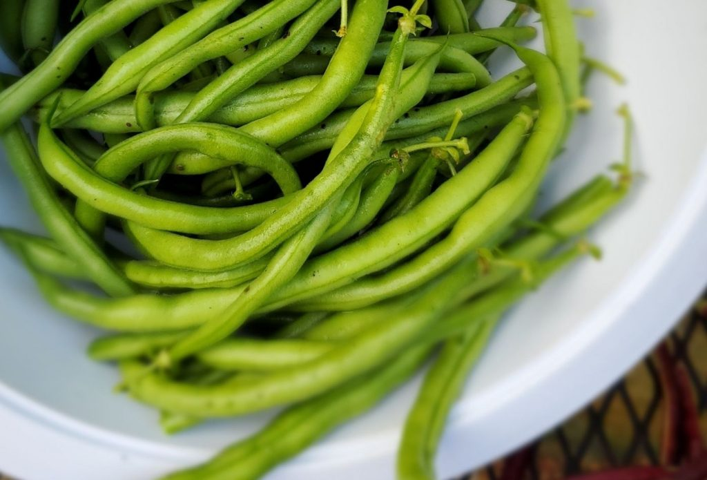 extra green beans from the garden