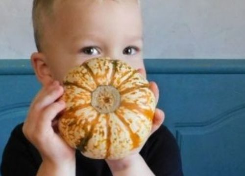 boy holding a small pumpkin at the table